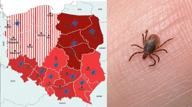 Zagrożenie kleszczami w Warszawie WSSE