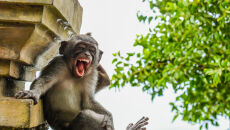 Luis Martí/Comedy Wildlife Photo Awards 2020