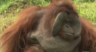 Zoo w Indonezji może uśmiercić niektóre zwierzęta kosztem innych
